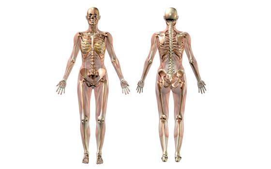 Csontváz