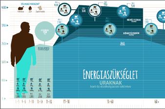 Ideális napi energiabevitel férfiaknál