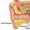 A fül anatómiája