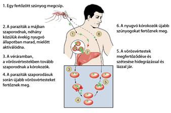 Malária