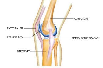 A térd sérüléseinek osztályozása Ízület – Wikipédia