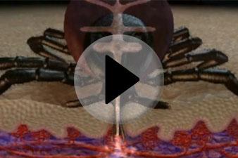 Kullancs vérszívás
