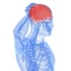 Az agyvelőgyulladás