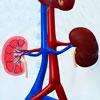 A mellékvesevelő-daganat