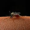 A Zika-vírus terjedése