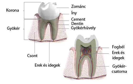 vény nélkül kapható fájdalomcsillapító fogfájásra