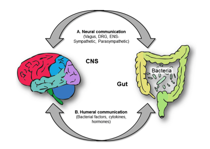 20+ Mikrobiom Diéta / Mikrobiom barát étrend ideas in | étrend, diéta, kapcsolatok