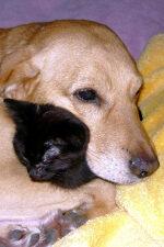 Kutyus és cica