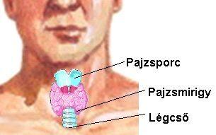 Pajzsmirigy anatómiai ábra