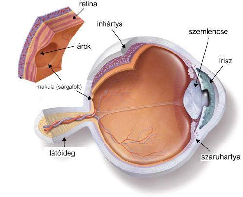 A szem sematikus ábrázolása