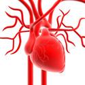 Szív- és érrendszeri betegségek