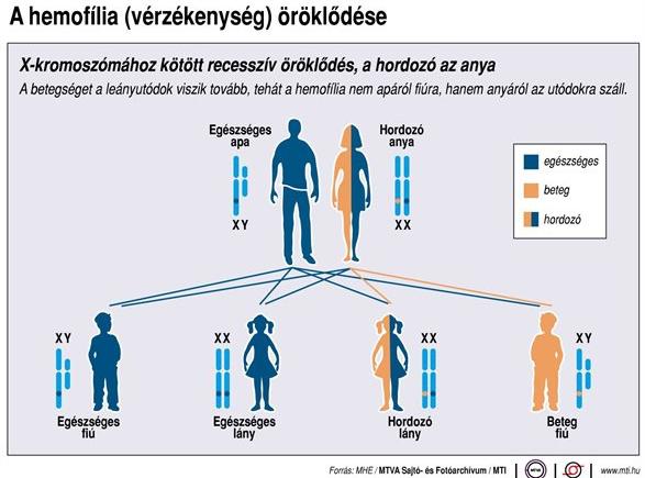 Hemofília öröklődése